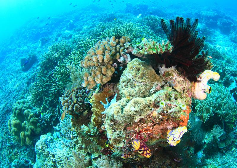 Coral Reef in Raja Ampat stock afbeelding