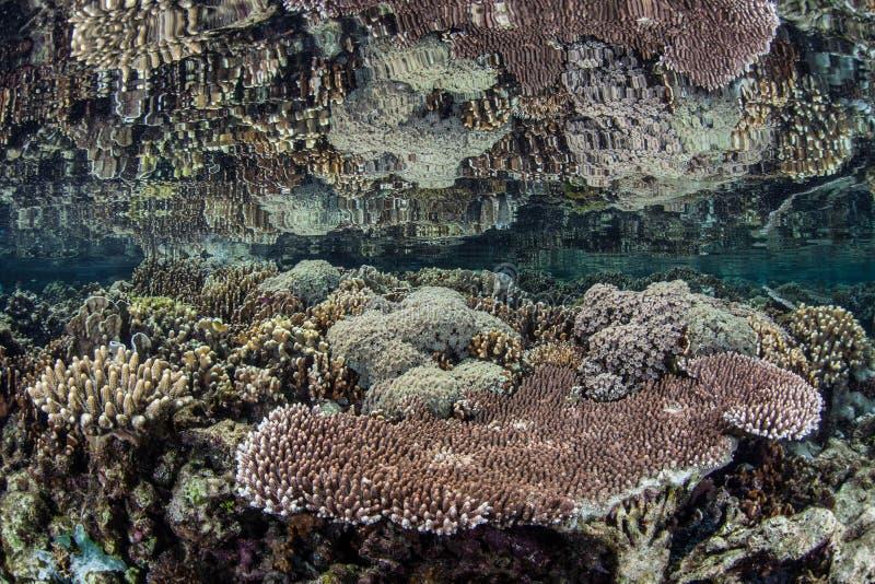 Coral Reef rasa 1 imagens de stock royalty free