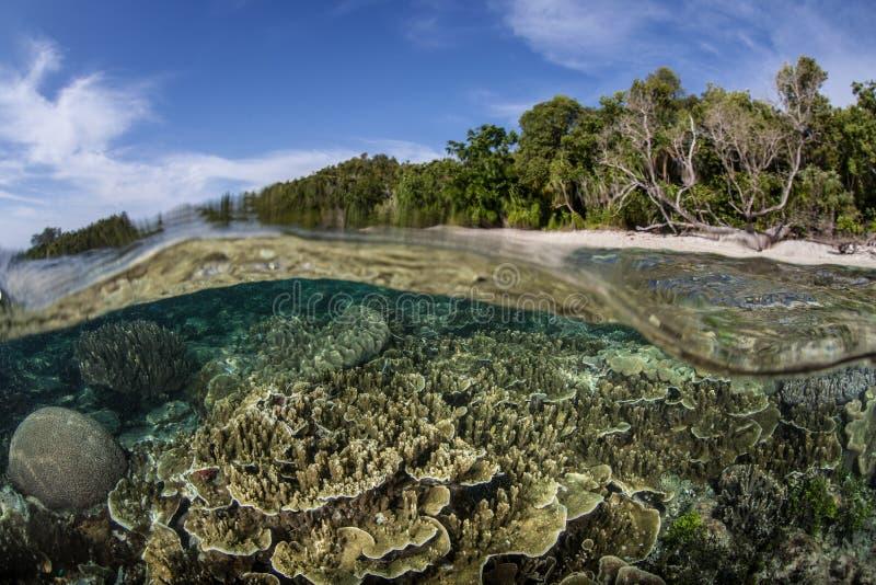 Coral Reef rasa 2 imagem de stock royalty free