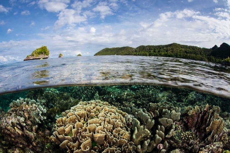 Coral Reef rasa, bonita em Raja Ampat fotografia de stock royalty free