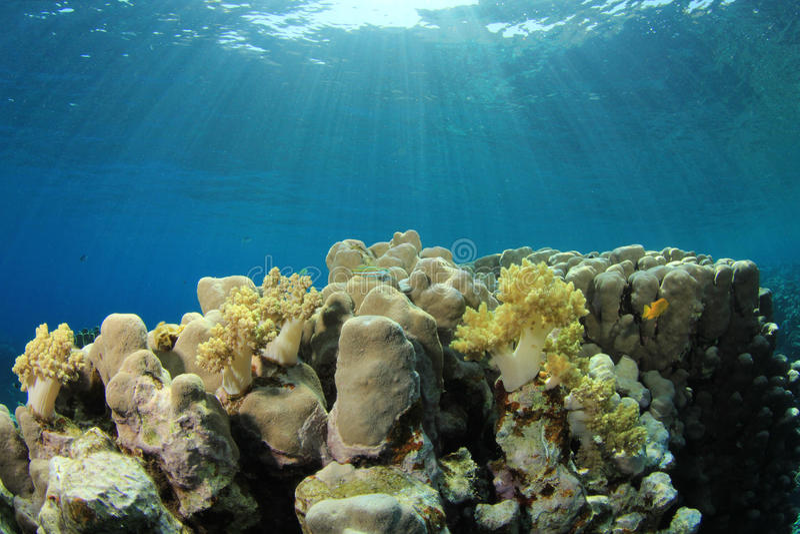 Download Coral Reef Scene stock image. Image of ocean, ecosystem - 25715281