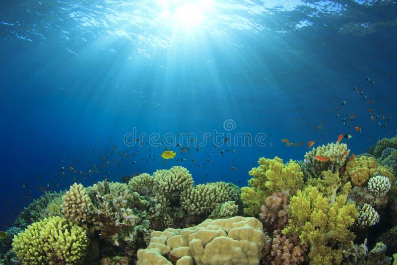 Coral Reef Scene immagine stock libera da diritti