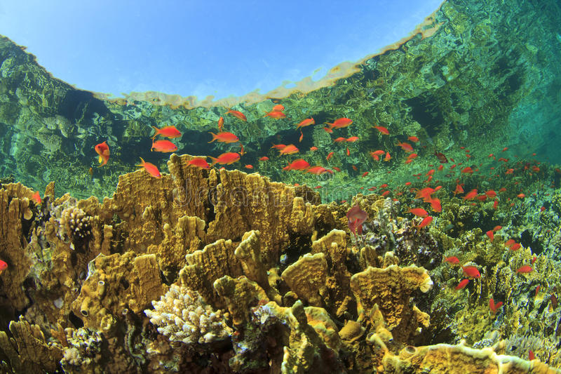 Coral Reef Scene images stock