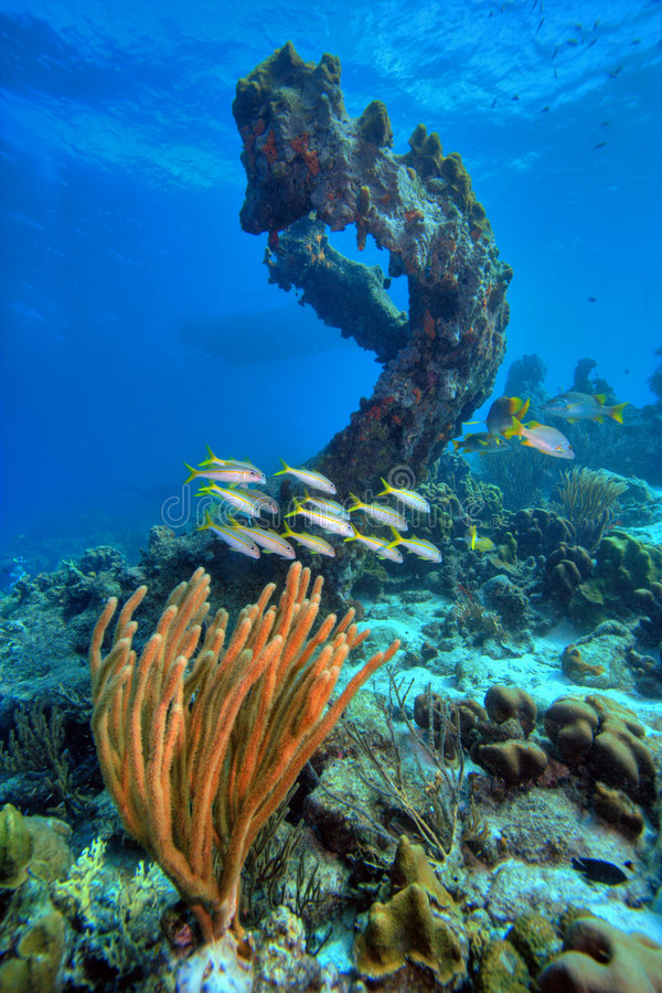 Free Coral Reef Scene Stock Images - 4314534