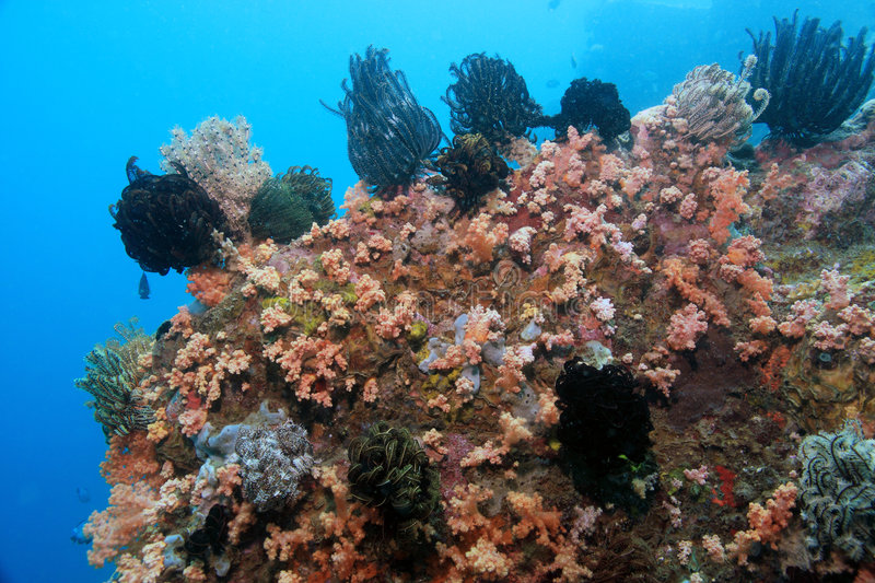 Download Coral Reef Scene Stock Photography - Image: 7989962