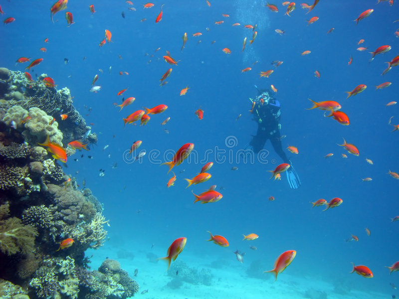 Coral Reef Scene with Divers stock photography