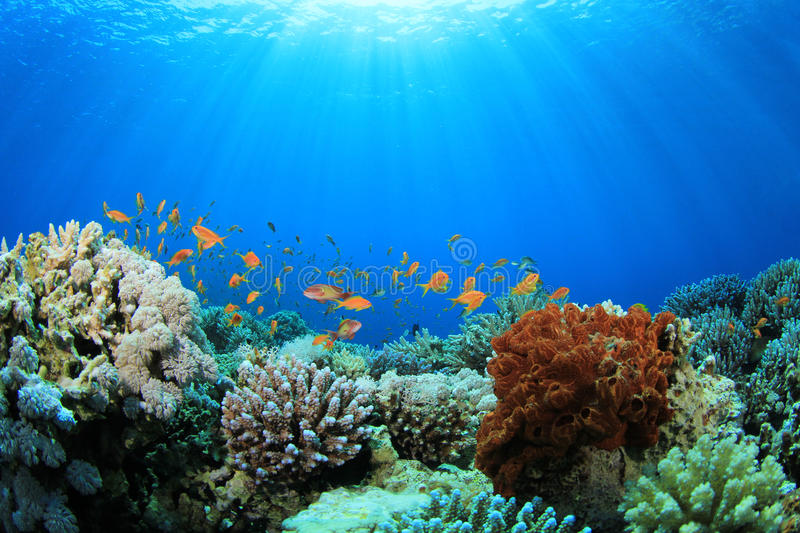 Download Coral Reef in the Sea stock photo. Image of background - 19481632