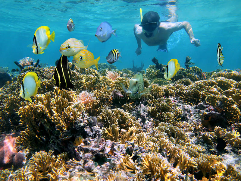 Download Coral Reef And Snorkeler Royalty Free Stock Photography - Image: 24626607