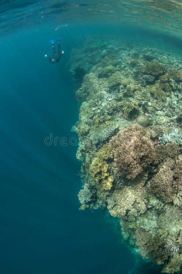 Coral Reef and Snorkeler stock photo