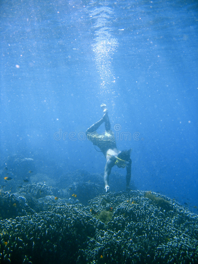 Download Coral reef snorkeling stock image. Image of diving, beneath - 2677813