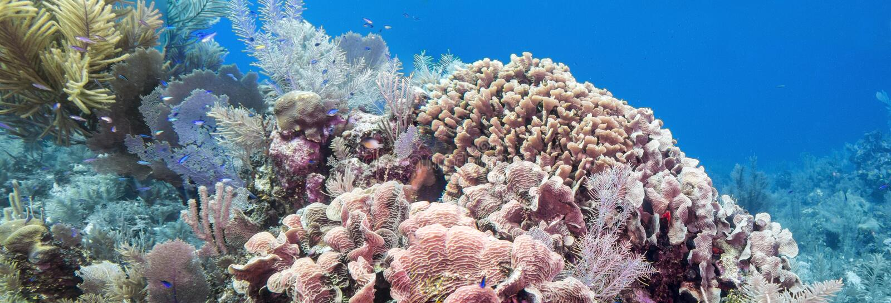 Coral Reef sous-marine photos stock