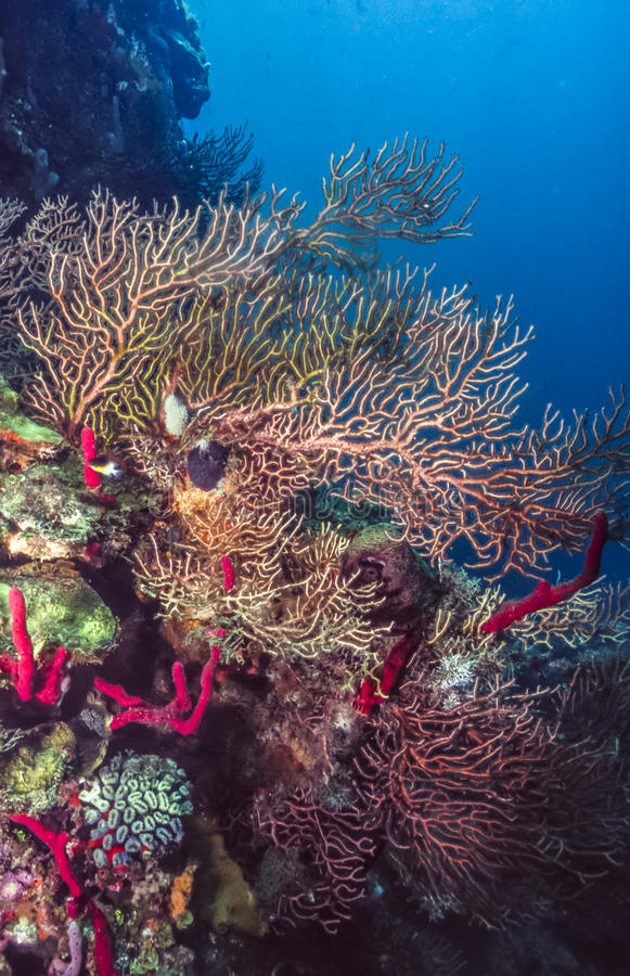 Coral Reef sous-marine photos stock
