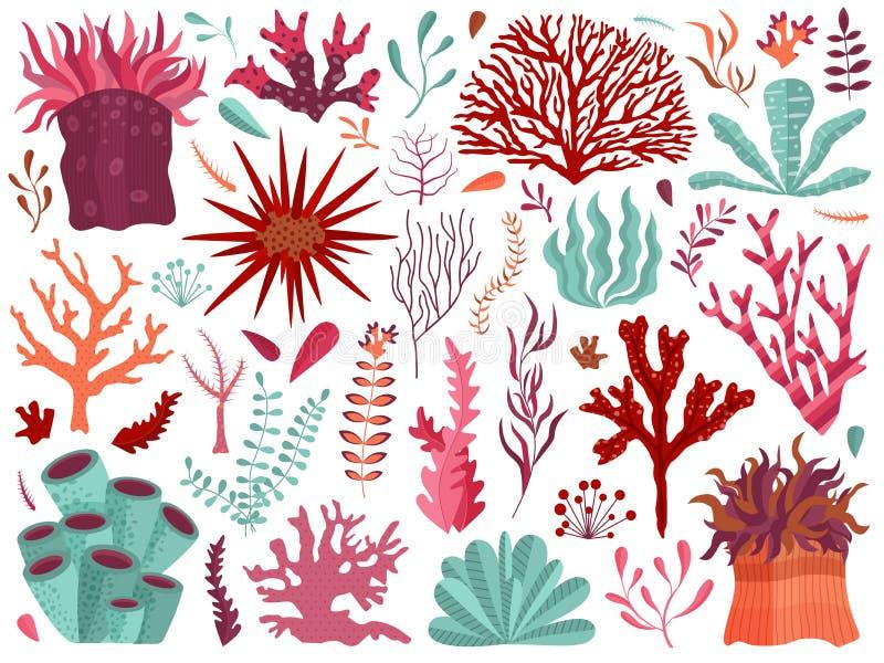 Coral Reef subacquea con le alghe e gli anemoni illustrazione di stock