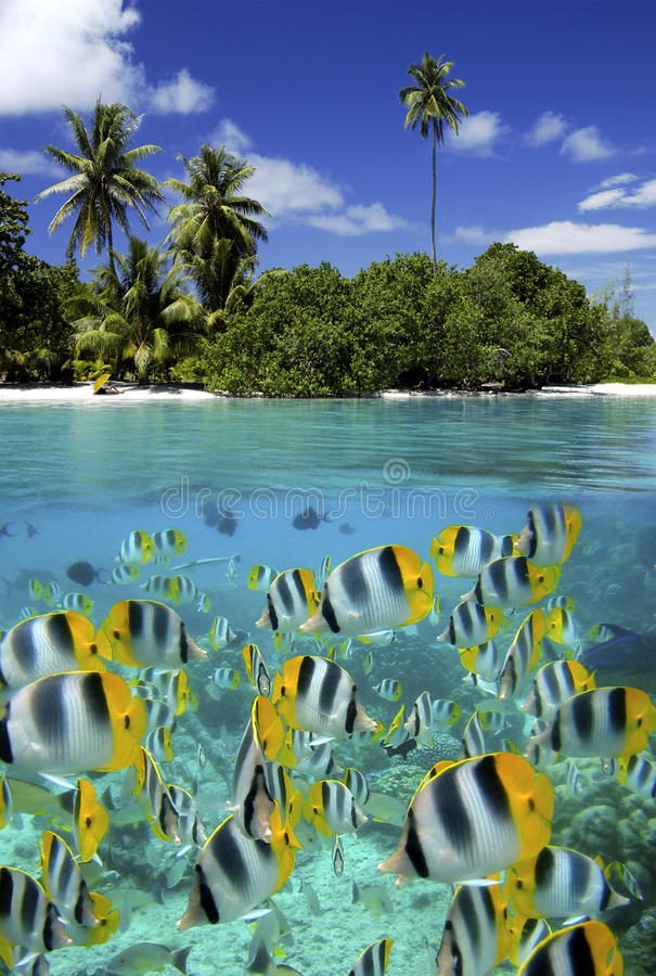 Coral Reef - Tahiti - French Polynesia. Fish on a coral reef in a tropical lagoon - Tahiti in French Polynesia in the South Pacific Ocean stock image