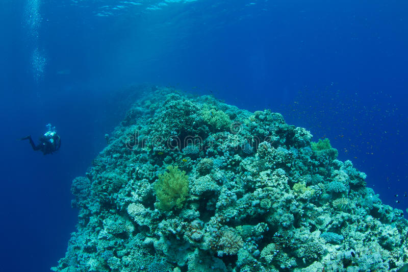 Coral reef with technical diver. The saddle of the Blue Hole with a technical diver decompressing stock photography