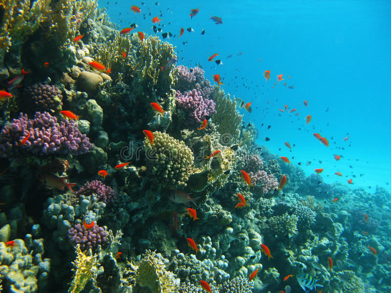 Download Coral Reef And Tropical Fishes Stock Photo - Image: 9878136
