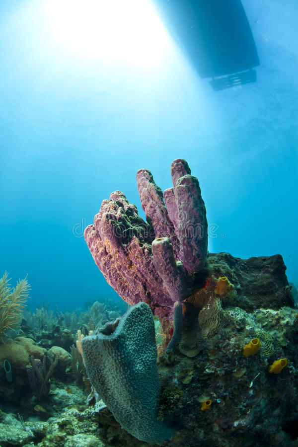 Download Coral reef stock photo. Image of dibe, marine, boat, underwater - 30257646