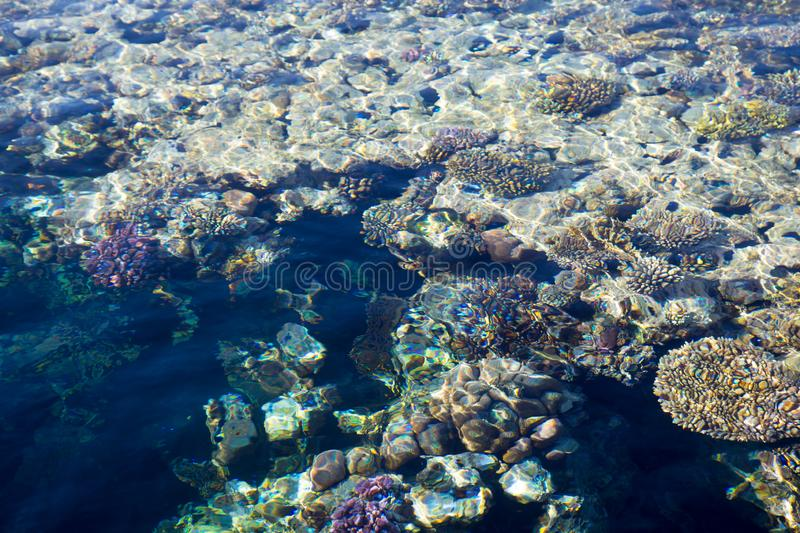 Coral reef is visible through the clear blue water. Beautiful blue sea wave photograph close up. Beach vacation at sea or ocean. royalty free stock photography
