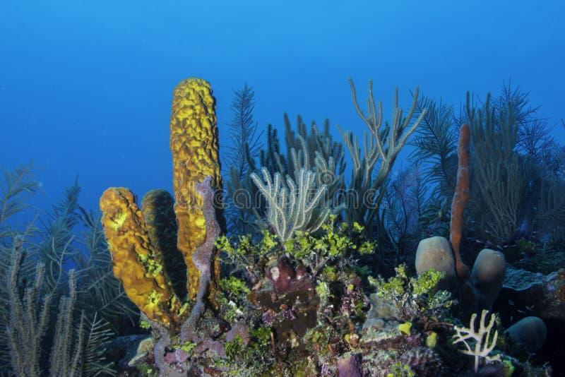 Coral Reef Yellow Sponge foto de stock
