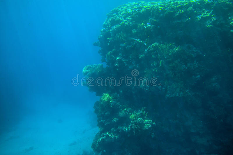 Coral reefs and fish in the red sea royalty free stock images