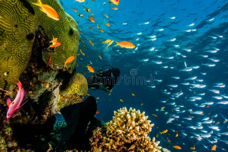 Coral reefs and water plants in the Red Sea, colorful and different colors. Photographed by Avner Efrati stock photography
