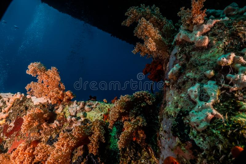 Coral reefs and water plants in the Red Sea. Colorful and full of different colors a.e royalty free stock image