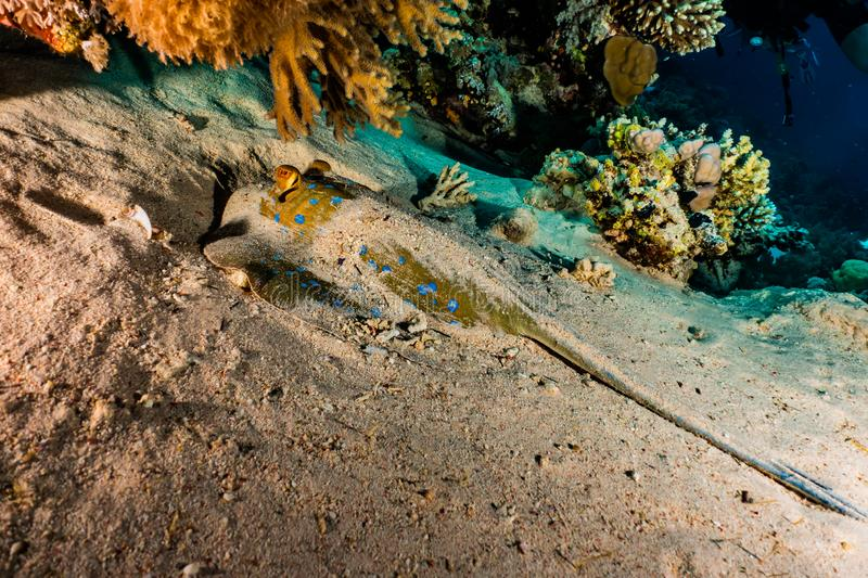 Coral reefs and water plants in the Red Sea. Colorful and full of different colors a.e stock photos