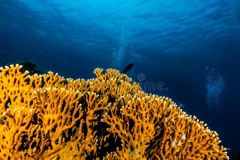 Coral reefs and water plants in the Red Sea. Colorful and full of different colors a.e stock image