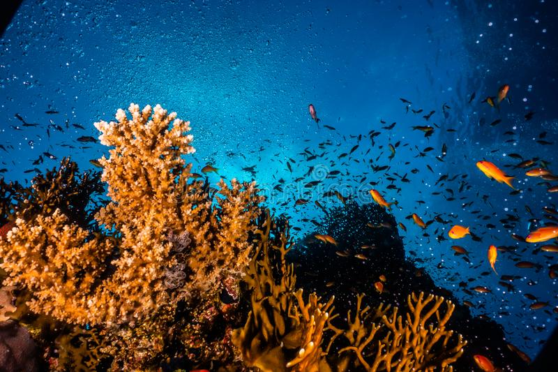Coral reefs and water plants in the Red Sea. Colorful and full of different colors a.e royalty free stock images