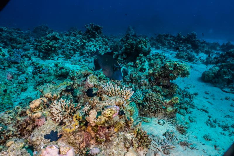 Coral reefs and water plants in the Red Sea. Colorful and full of different colors a.e stock images