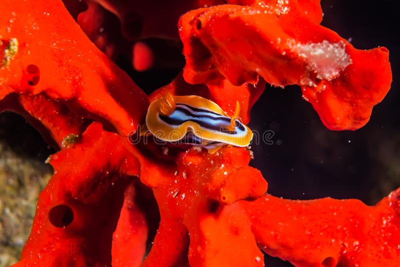 Coral reefs and water plants in the Red Sea. Colorful and full of different colors a.e royalty free stock photo