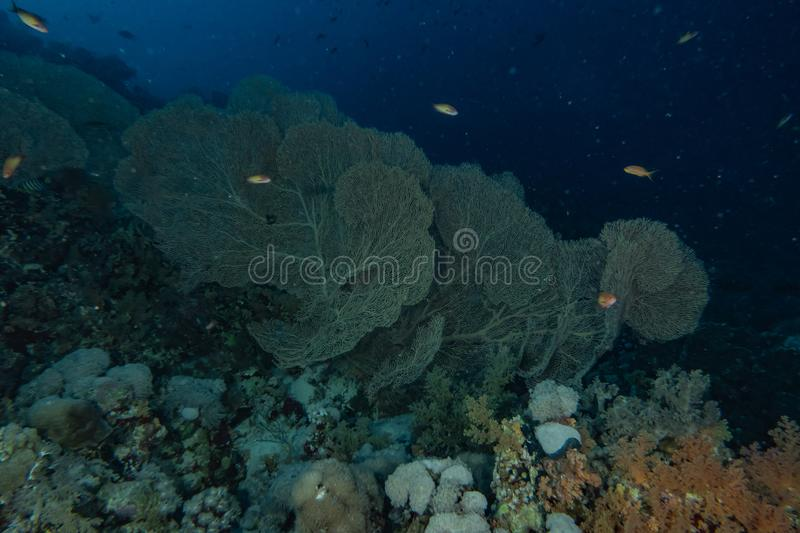Coral reefs and water plants in the Red Sea. Eilat Israel stock photography