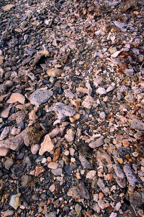 Coral Rock Background Virgin Islands photos libres de droits