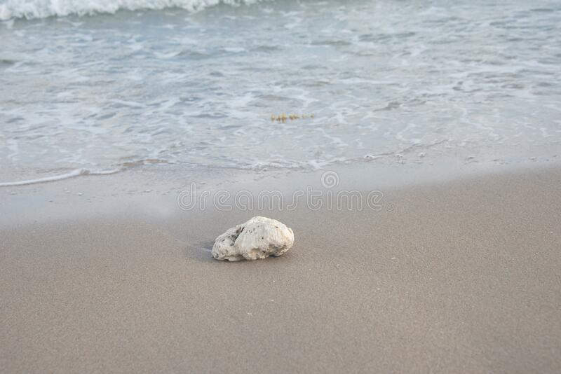 Coral Rock on the Sandy Beach. A Coral Rock on the Sandy Beach in South Florida royalty free stock images