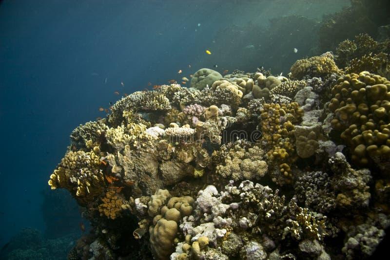 coral ryb fotografia royalty free