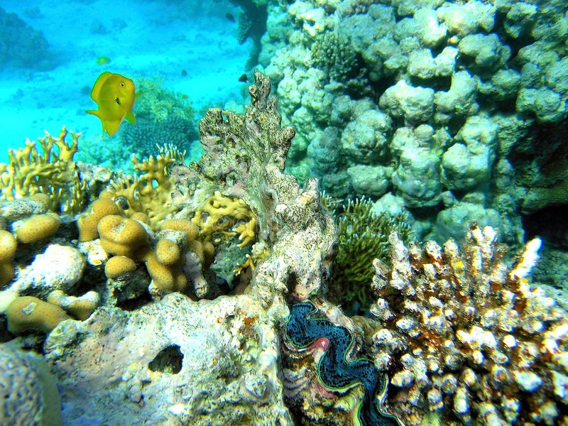 Download Coral Scene Withe The Giant Stock Photo - Image: 8140442