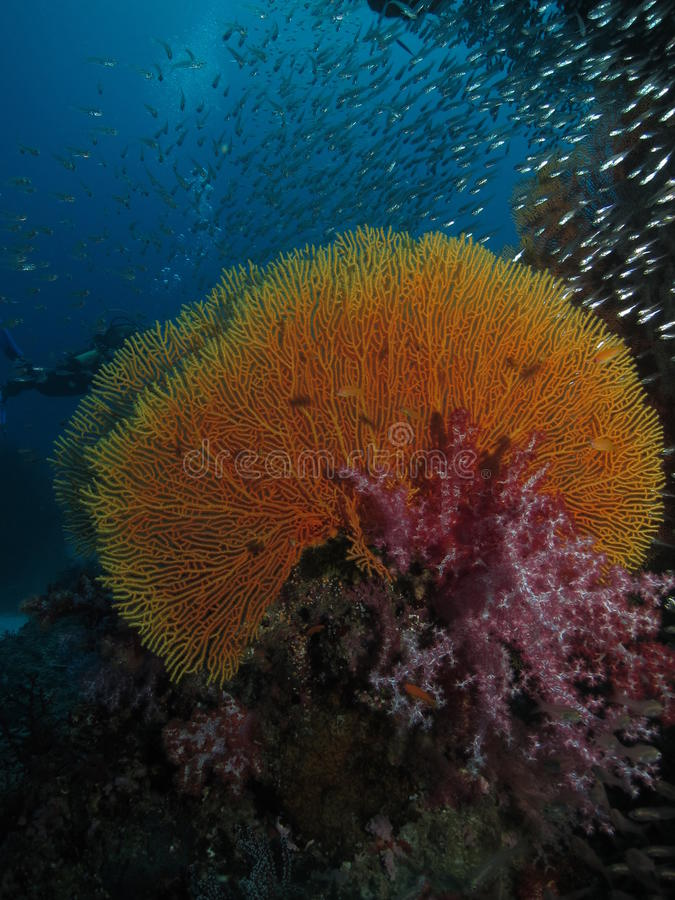 Coral and a school of fish stock image