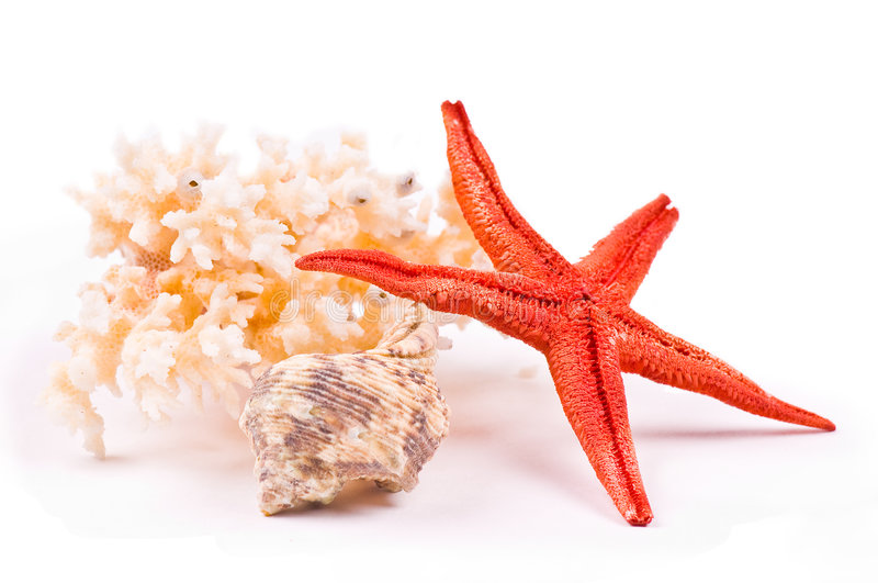 Coral, sea-star and seashell stock photography