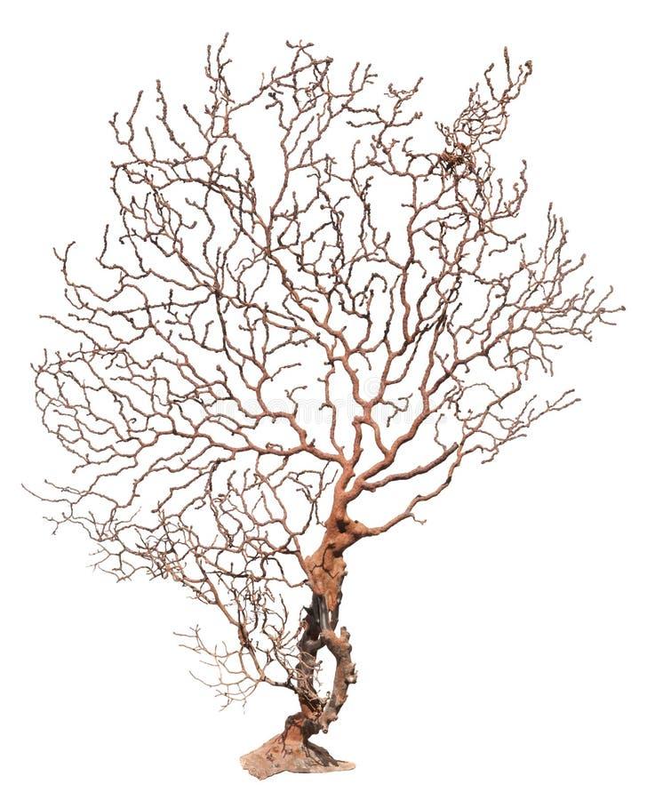 Coral Sea Tree royalty-vrije stock afbeeldingen
