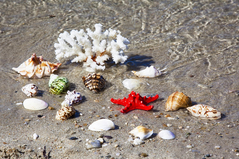 Coral, seashells and starfish on seashore. Shallow depht of field. Focused on red starfish. Coral, seashells and starfish on seashore stock images