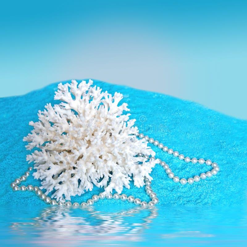 Coral Shell blanca en BlueSand/el agua fotografía de archivo libre de regalías