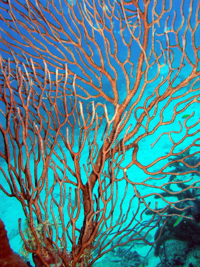 Coral in south Florida royalty free stock photo