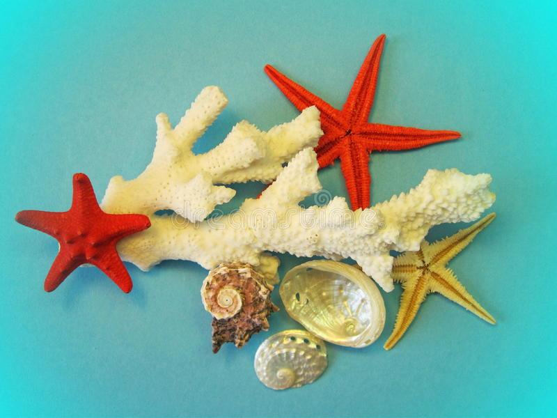 Coral, starfishes and shells royalty free stock photo