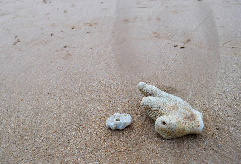 Coral Stones branca em Sandy Beach - textura Marine Background litoral natural do sumário foto de stock