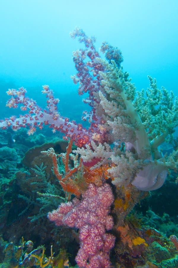 Coral suave colorido del capellán Burgos, Leyte, Filipinas imagenes de archivo