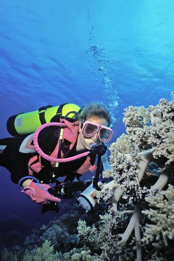 Coral suave de Indonesia imagenes de archivo