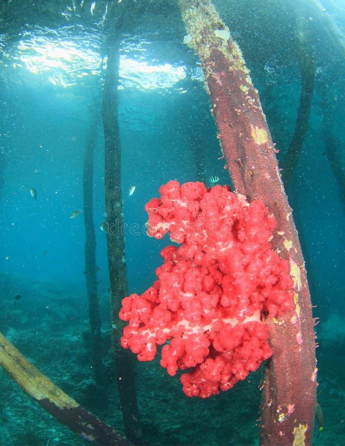Coral suave del árbol imagen de archivo libre de regalías