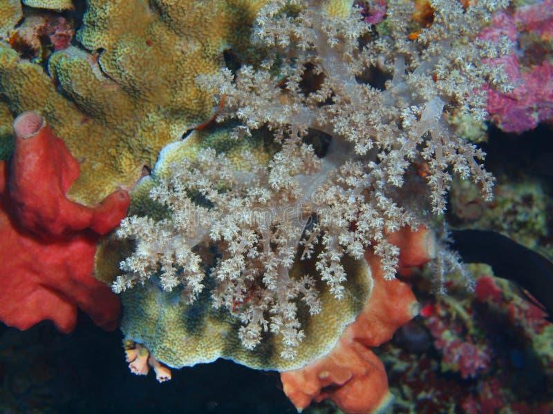 Coral suave imagenes de archivo