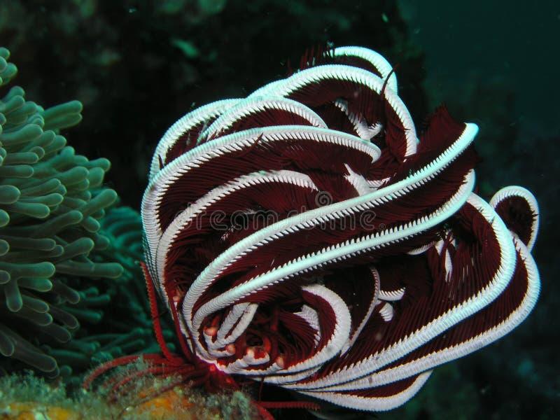 Coral suave, mar de Tailandia fotos de archivo libres de regalías