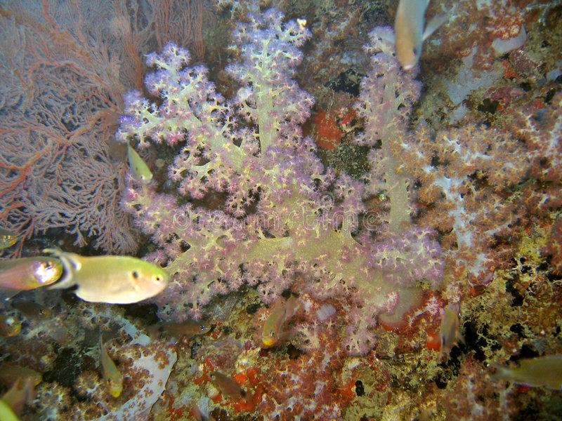 Coral suave sano fotos de archivo